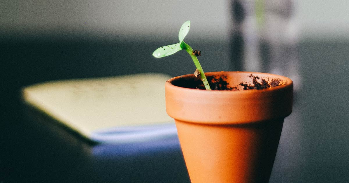 Creating Healthy Growth